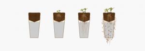 Žara je sestavljena iz dveh delov: zgornje kapsule za seme in spodnjega dela za pepel.